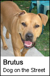Brutus - Dog on the Street