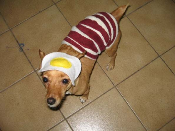 bacon-and-egg-dog-costume