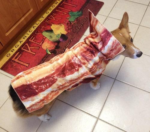 bacon-corg
