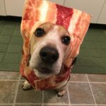 10 Pets in Bacon Halloween Costumes